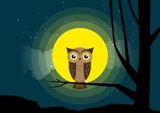 猫头鹰坐月光的树枝背景 免版税图库摄影