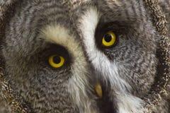 猫头鹰强光 库存照片