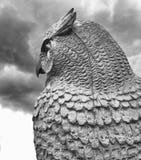 猫头鹰有多云背景 免版税库存照片