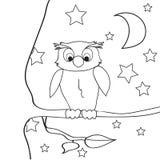 猫头鹰概述着色夜 免版税库存照片
