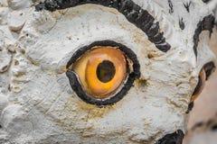 猫头鹰眼睛凝视 免版税库存图片