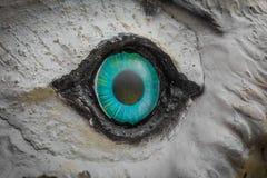 猫头鹰眼睛凝视 免版税库存照片