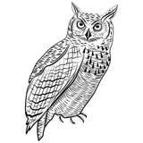 猫头鹰鸟吉祥人或象征设计的,商标T恤杉纹身花刺设计的传染媒介例证头标志 免版税库存照片