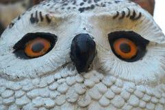猫头鹰鸟眼睛 免版税库存照片