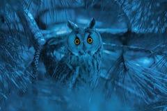 猫头鹰画象与刺穿橙色眼睛的在阴沉的蓝色backgro 库存照片
