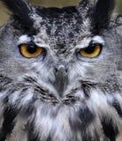 猫头鹰画象 库存照片