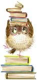 猫头鹰 逗人喜爱的猫头鹰 水彩森林鸟 教科书例证 动画片鸟 免版税库存图片