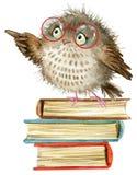 猫头鹰 逗人喜爱的猫头鹰 水彩森林鸟 教科书例证 动画片鸟 免版税图库摄影