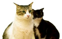 猫 库存图片