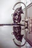 水猫 库存照片