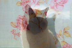 猫` s剪影 动物坐窗口 免版税库存照片