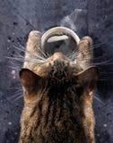 猫` s爪子拿着一个杯子热的无奶咖啡 一只灰色猫弯曲了在一杯咖啡与蒸汽的 古色古香的企业咖啡合同杯子塑造了新鲜的早晨好老笔场面打字机 库存照片