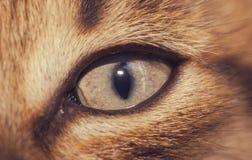 猫` s眼睛特写镜头,特写镜头 小猫调查透镜 图库摄影