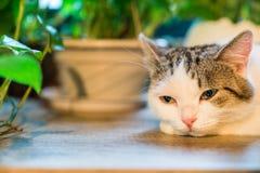 猫` s眼睛 免版税库存照片