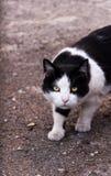 猫` s等待 免版税库存照片