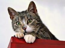 猫` s衣橱作为监视塔 免版税库存图片