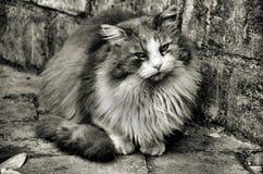 猫hdr 图库摄影