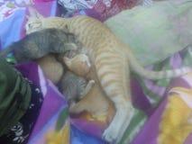 猫n她的小猫 库存照片