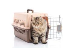 猫ponibcctyc vk在白色背景隔绝的宠物载体 库存照片