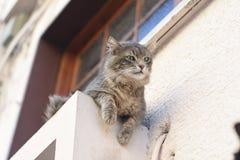 猫potrait 免版税库存照片