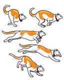猫Runinng快速的动画魍魉 免版税图库摄影