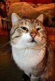 猫s闪光 库存照片