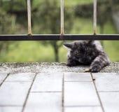 猫want的他的快餐 免版税图库摄影