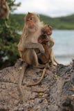 """猴子â€家庭""""母亲和孩子 免版税库存照片"""
