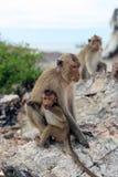 """猴子â€家庭""""母亲和孩子 库存照片"""