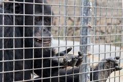 猴子乞求为食物在动物园 免版税库存照片