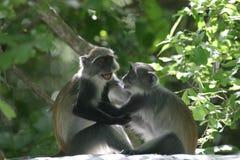 猴子作用 免版税库存图片