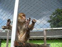 猴子动物园 免版税库存照片
