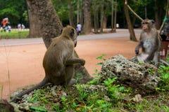 猴子反射-自然错觉 免版税库存照片