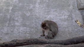 猴子在动物园里 股票录像