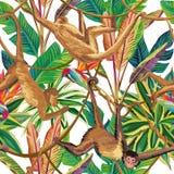 猴子在密林无缝的白色背景中 免版税库存照片
