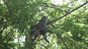 猴子在树坐 影视素材