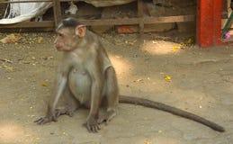 猴子坐铁格栅 免版税库存照片