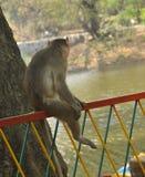 猴子坐铁格栅 图库摄影
