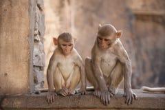 猴子寺庙 库存照片