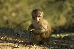 猴子年轻人 免版税库存图片