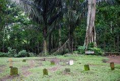 猴子森林公园 库存照片