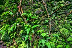 猴子森林, Ubud,巴厘岛,印度尼西亚墙壁  库存图片