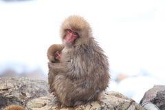 猴子母亲和婴孩 免版税库存图片