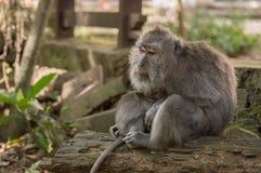 猴子母亲 免版税图库摄影