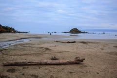 猴子海岛在南方,南岛,新西兰 库存图片