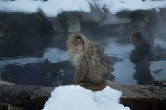 猴子等待的希望 免版税库存照片