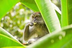 猴子结构树 库存照片