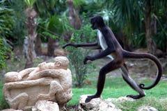 猴子蜘蛛 免版税库存照片