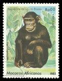 猴子,黑猩猩 免版税库存照片