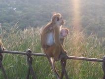 猴子MomLove 免版税图库摄影